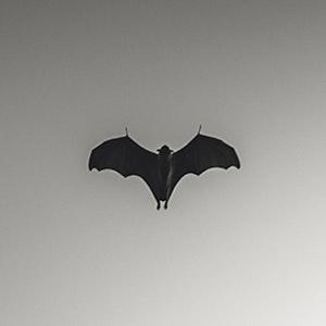 The bat effect