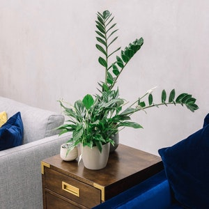 How to style your shop with plants by Patch