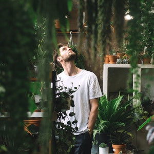 Plantes et compagnie